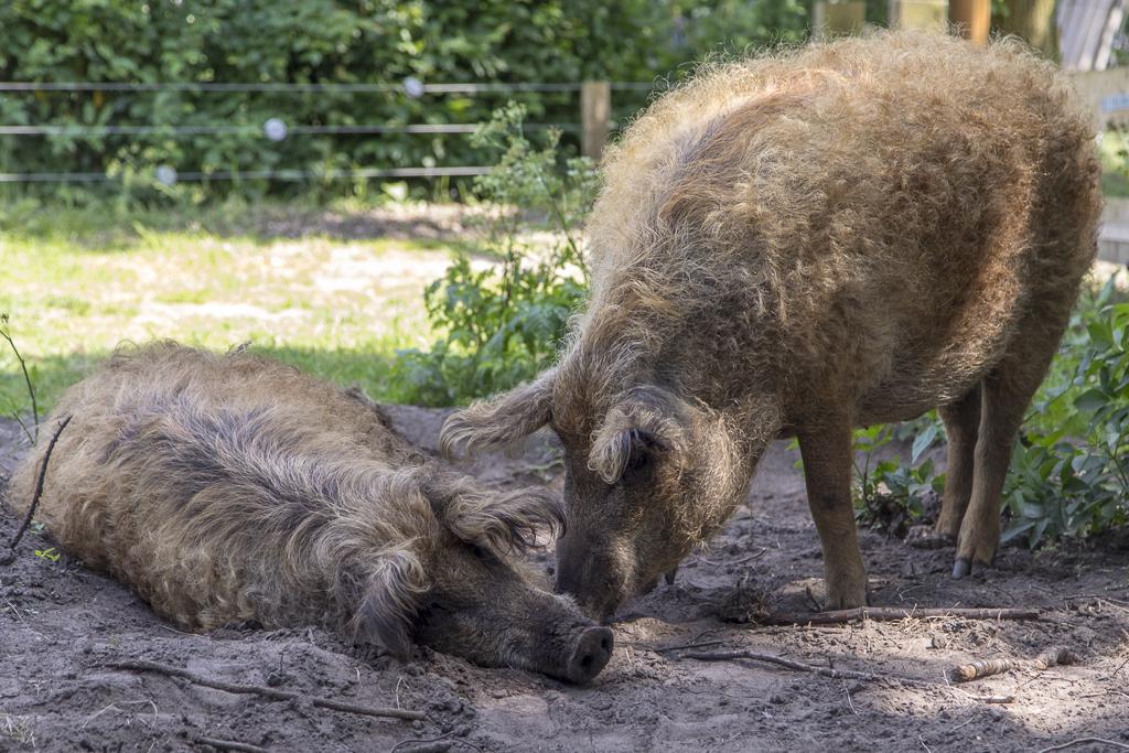 Henk en Ineke bleven twee weken langer in het bos