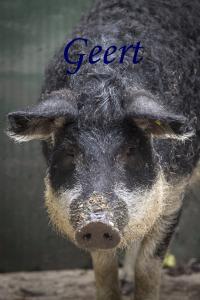 Geert